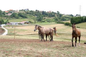 Hipica Porceyo Caballos