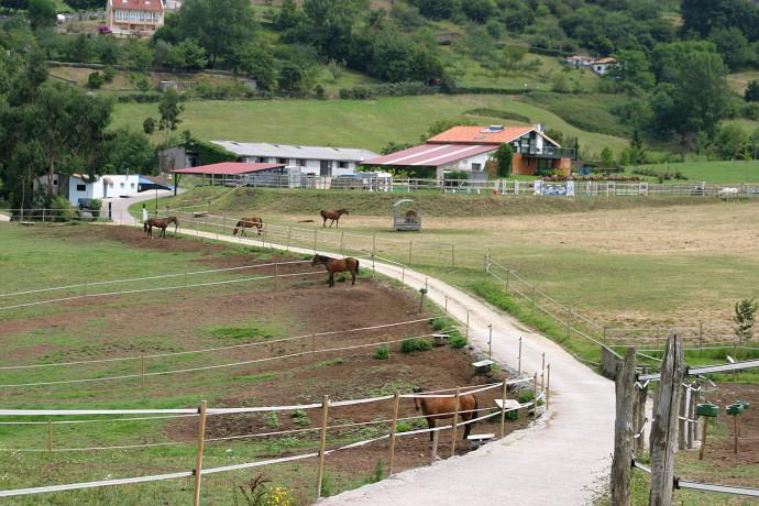 Pastos y Caballos Hipica Porceyo